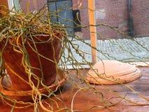 Växt och skal royaltyfri bild