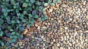 Växt och sten Arkivbilder