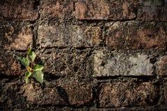 Växt och vägg royaltyfri foto
