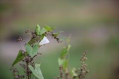 Växt på bakgrund för vjunrasfokusirovannomgräsplan Royaltyfri Foto