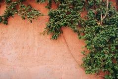 Växt på en orange vägg Royaltyfri Fotografi