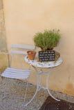 Växt på en utomhus- tabell i Provence Arkivfoto