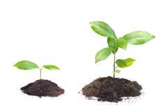 Växt på högen av jord Arkivbild