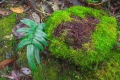 Växt på jordning Arkivbilder