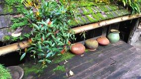 Växt på taket Royaltyfri Foto