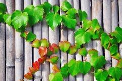 Växt på trä Arkivbilder