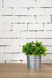 Växt på trätabellen med vit tegelstenbakgrund Arkivbilder