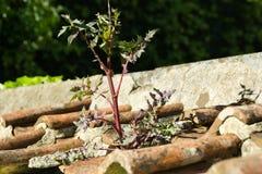 Växt på väggen med lerataktegelplattor royaltyfria foton