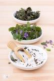Växt- salt och jordmurgröna Royaltyfri Fotografi
