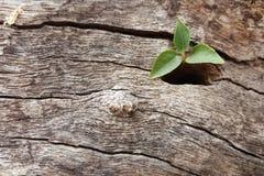 växt som fortlever i det wood hålet Royaltyfria Foton