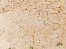 Växt som fortlever i torr jordning royaltyfri fotografi