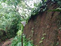 Växt som kobra Royaltyfria Foton