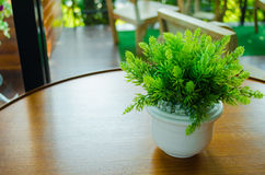 Växt som läggas in på tabellen Arkivfoto
