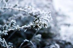 Växt som täckas med rimfrost Arkivbild