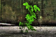 Växt som växer i övergiven fabrik Royaltyfri Fotografi