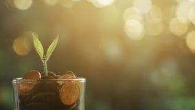 Växt som växer i besparingmynt royaltyfri foto