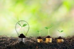 Växt som växer i den ljusa kulan, nytt liv på begrepp för utbildning för idé för affär för utveckling för ekologi för tillväxt fö fotografering för bildbyråer