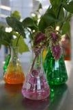 Växt som växer i Hydrogelpärlor Royaltyfri Fotografi