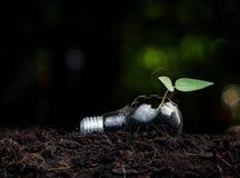 Växt som växer i ljus kula Royaltyfri Fotografi