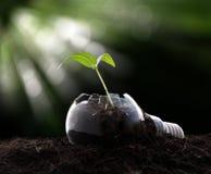 Växt som växer i ljus kula Royaltyfri Bild