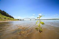 Växt som växer i Missouri River royaltyfria foton