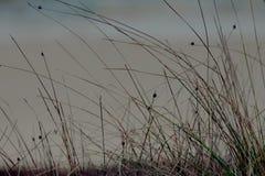 Växt som växer i sanden Arkivfoton