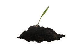 Växt som växer på jord Royaltyfri Fotografi