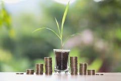 Växt som växer på mynt i den glass kruset Ökande antal av kassa arkivbild