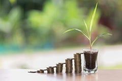Växt som växer på mynt i den glass kruset Ökande antal av kassa royaltyfria foton
