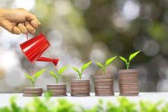 Växt som växer på pengarmyntbunt coins sparande för stapel för begreppshandpengar skyddande finan fotografering för bildbyråer