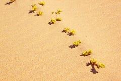 Växt som växer på sanddyn Fotografering för Bildbyråer