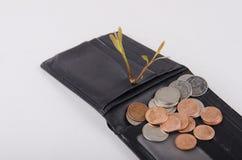 Växt som växer ut ur mynt Royaltyfri Bild