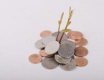 Växt som växer ut ur mynt som isoleras på vit Royaltyfri Fotografi