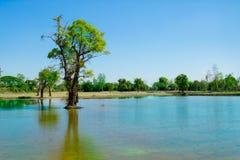 Växt sommar, träd, tropiskt klimat, tropiskt träd royaltyfri fotografi