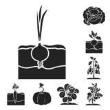 Växt svarta symboler för grönsak i uppsättningsamlingen för design Arbeta i trädgården och skörda illustrationen för rengöringsdu Royaltyfria Foton