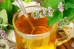 växt- tea royaltyfria foton