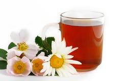 växt- tea Royaltyfri Fotografi