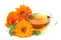 växt- tea för calendula royaltyfri bild