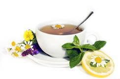 växt- tea för camomile Royaltyfri Fotografi