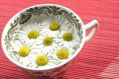 växt- tea för camomile Arkivbilder