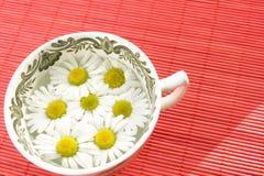 växt- tea för camomile royaltyfri foto