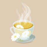 växt- tea för chamomile vektor illustrationer