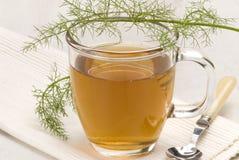 växt- tea för fennel Arkivfoton
