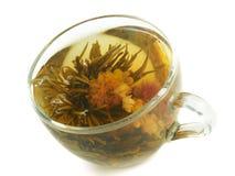 växt- tea för kopp Arkivbild