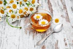 växt- tea för kopp Royaltyfria Bilder
