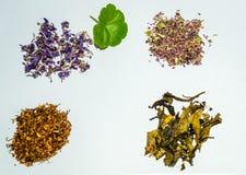 växt- tea för samlingsblomma Royaltyfria Foton