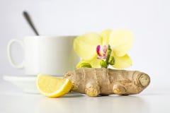 växt- teawhite för bakgrund Fotografering för Bildbyråer