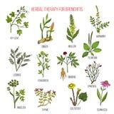 Växt- terapi för bronkitmurgrönan, ingefära, mullein, agrimony, lakrits, bockhornsklöver, ginseng, ephedra, pisang, angelika Royaltyfria Foton