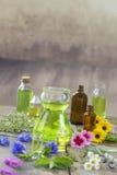 Växt- terapi och aromathrapy begrepp: alternativ behandling med nya medicinska örter och blommor på trä Arkivfoton