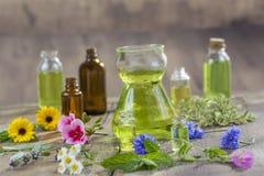 Växt- terapi och aromathrapy begrepp: alternativ behandling med nya medicinska örter och blommor på trä Arkivfoto